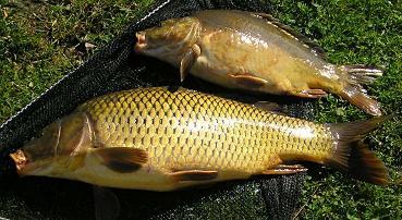 základná encyklopédia rýb párnický rybár